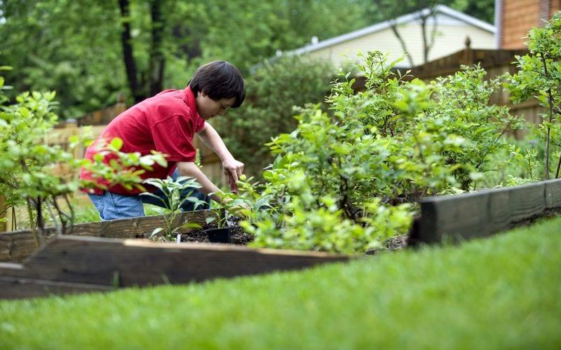 10 Autumn Gardening Tips