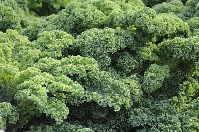 kale - best winter crops